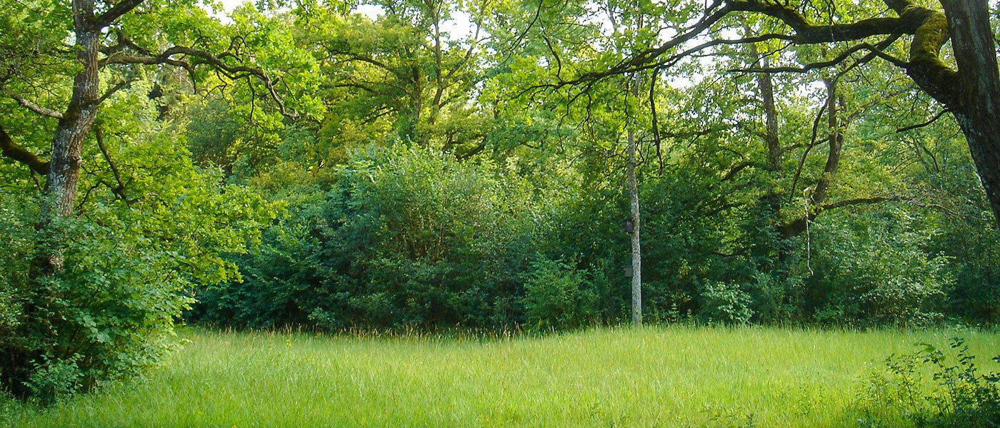 Brenne: eine trockene und offene Fläche im sonst feuchten Auwald