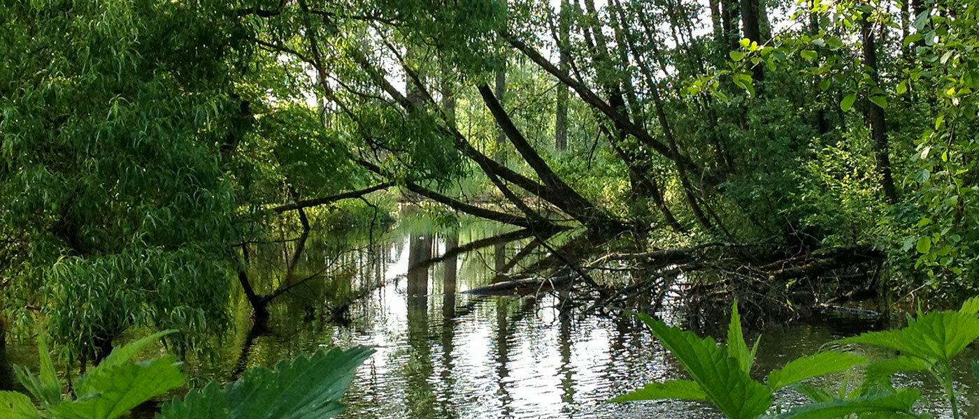 Ein naturnah gestaltetes Gewässer: der Auenbach