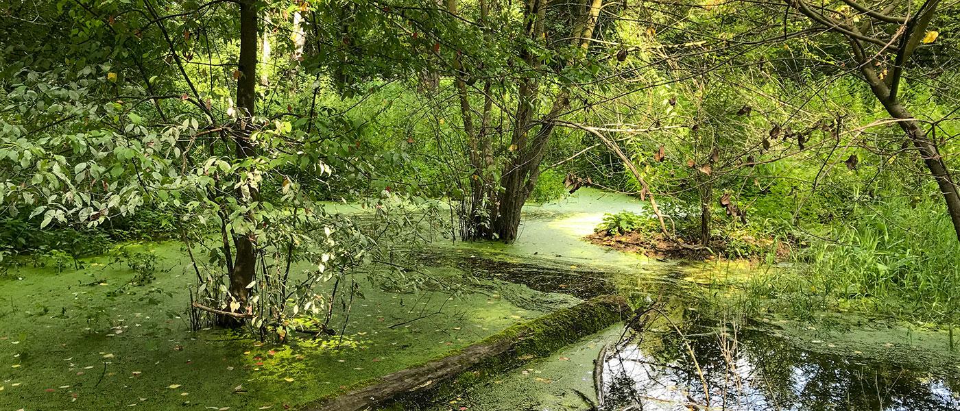 Donauauwald als nationales Naturmonument