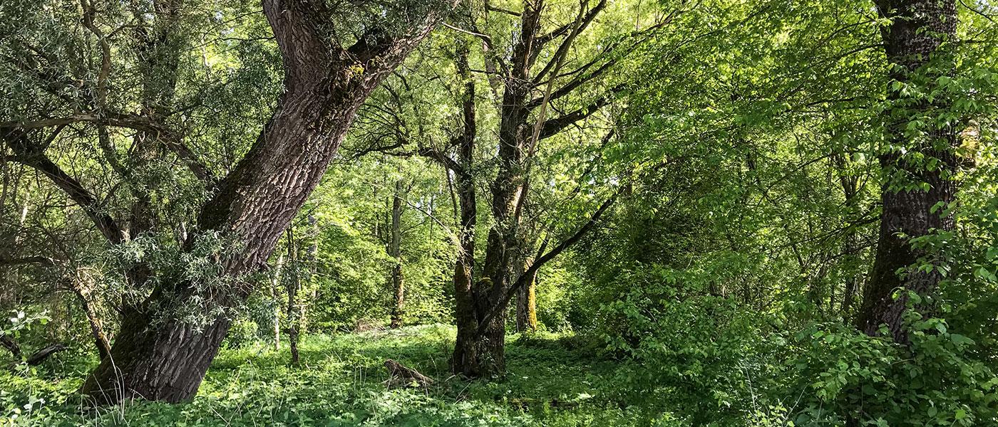 960 Hektar Naturwald
