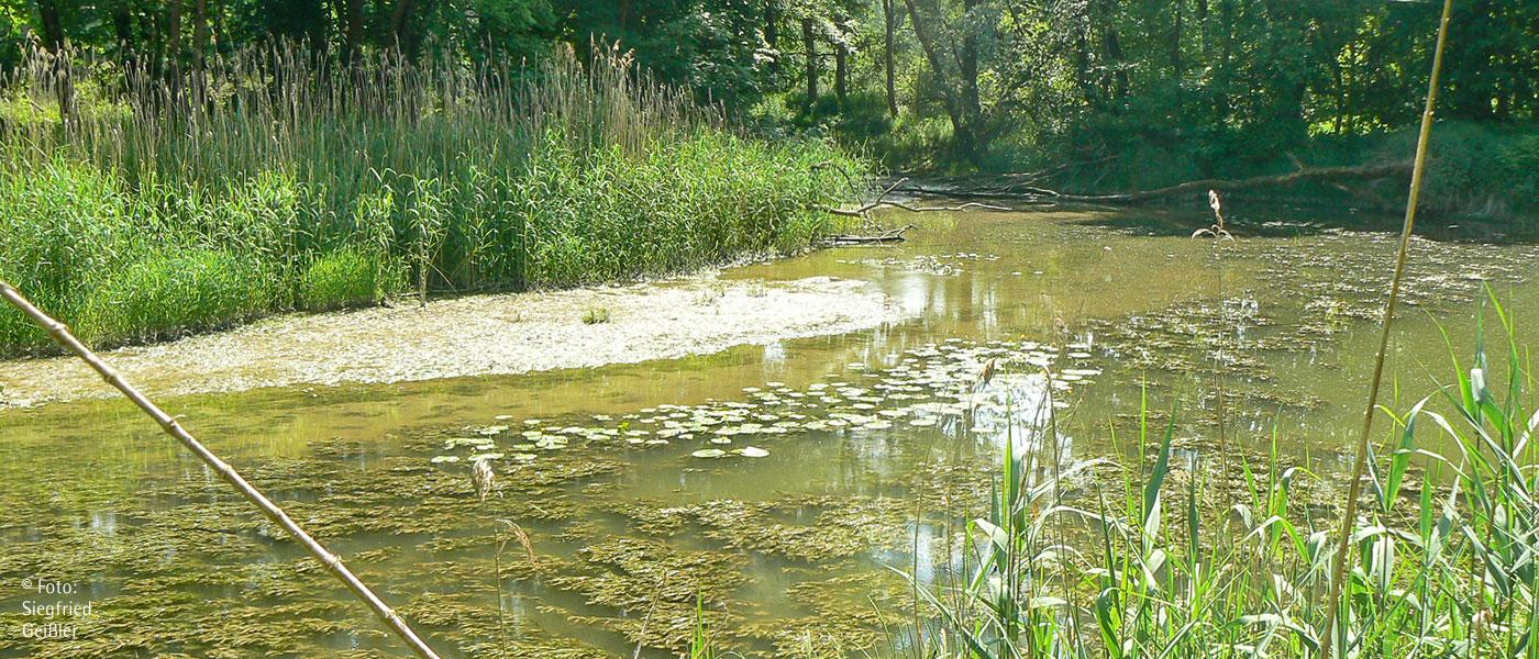 Faszination Auwald - Das Naturparadies vor unserer Haustüre