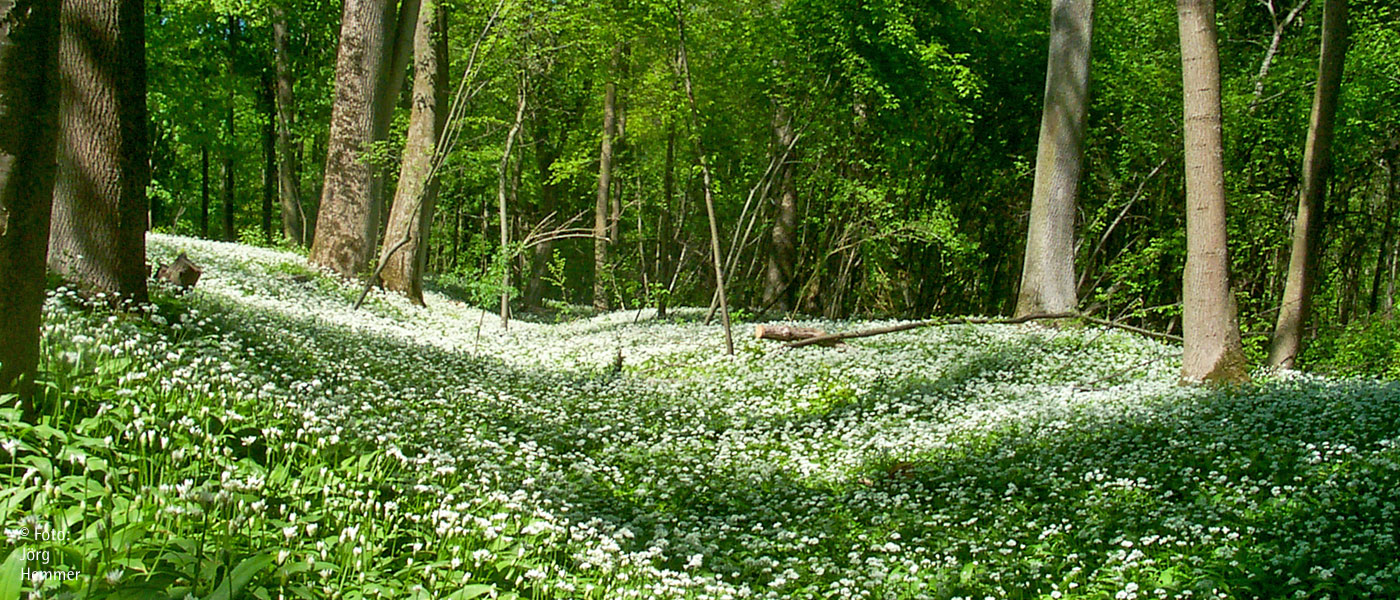 Ein Blütenmeer im Frühling