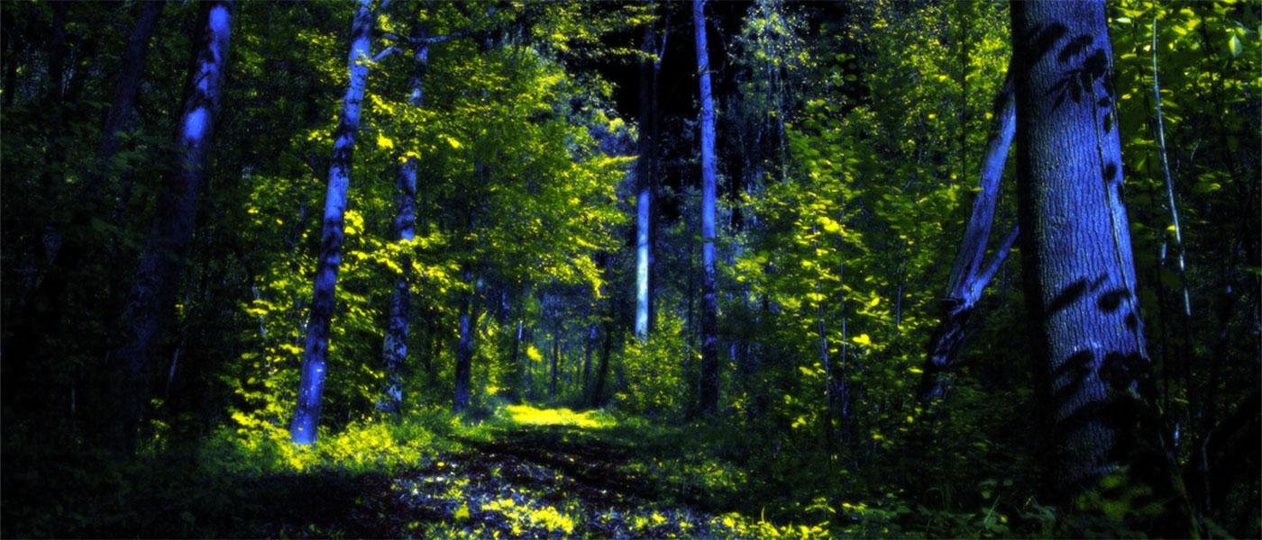 Temporäre Waldilluminationen sind ein besonderes Erlebnis